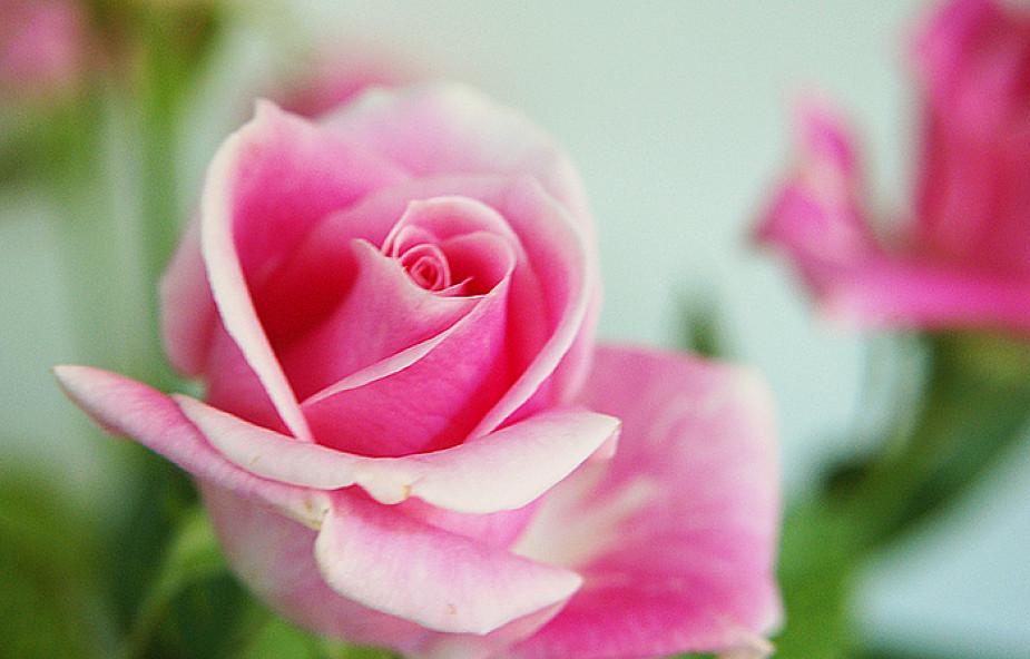 Aby Kwiaty Stały Dłużej Sztuczki Kwiaciarek